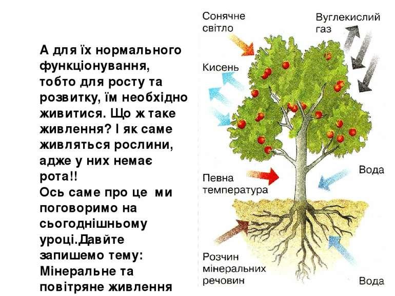 А для їх нормального функціонування, тобто для росту та розвитку, їм необхідн...