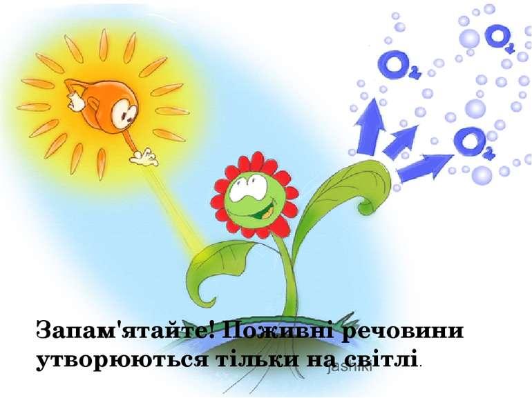 Запам'ятайте! Поживні речовини утворюються тільки на світлі.