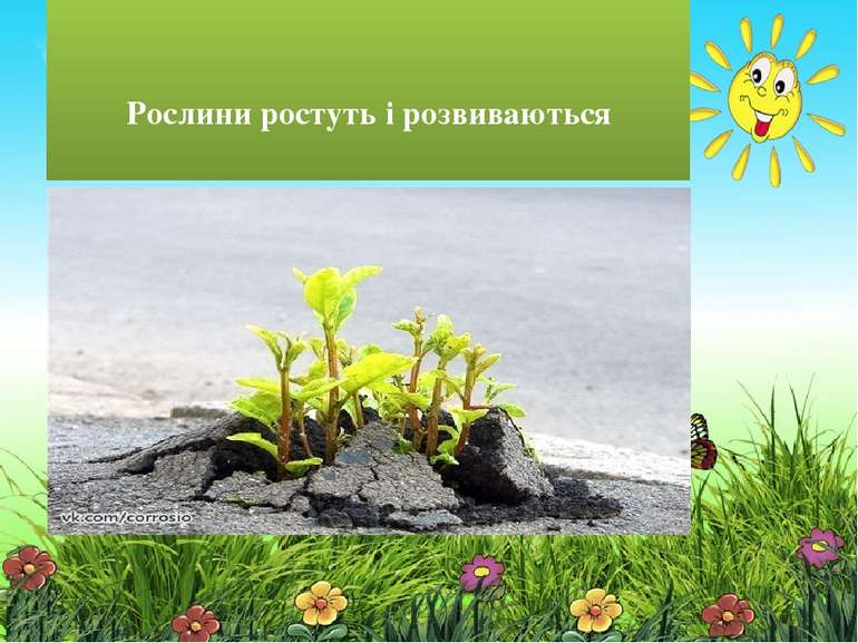 Рослини ростуть і розвиваються