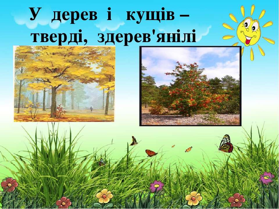 У трав'янистих рослин стебла м'які, соковиті У дерев і кущів – тверді, здерев...