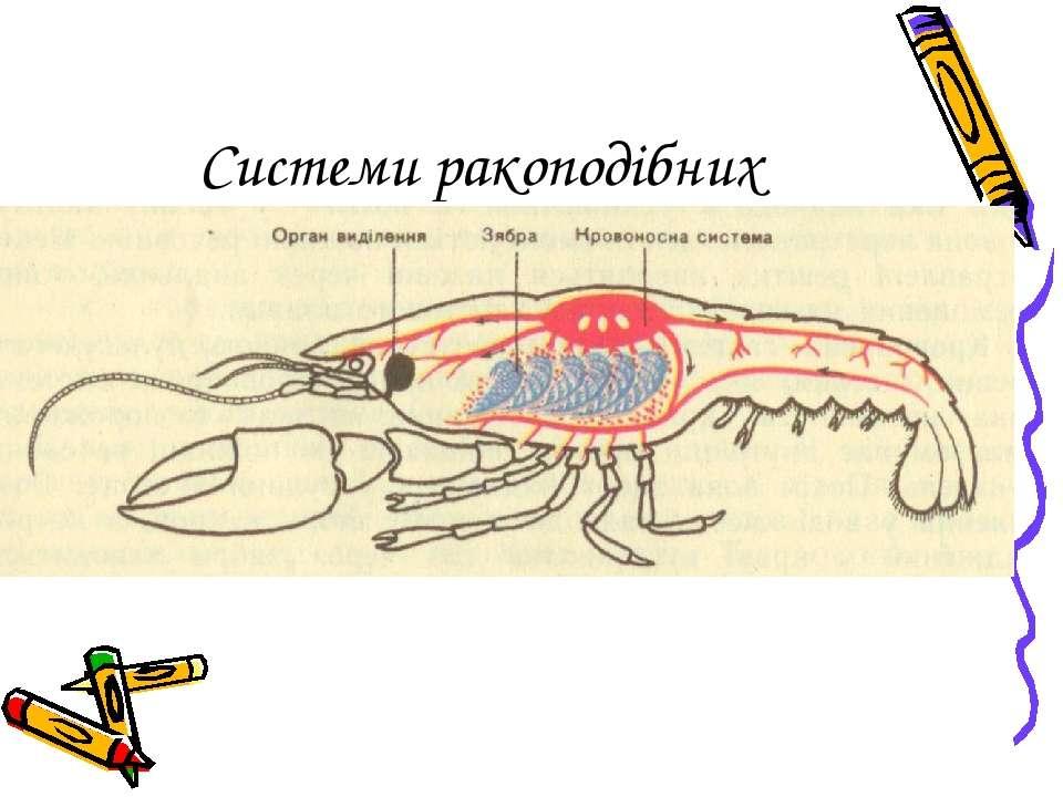 Системи ракоподібних