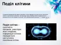 Поділ клітини Поділ клітин – сукупність процесів, унаслідок яких спадкова інф...