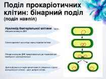 Поділ прокаріотичних клітин: бінарний поділ (поділ навпіл) Нуклеоїд бактеріал...