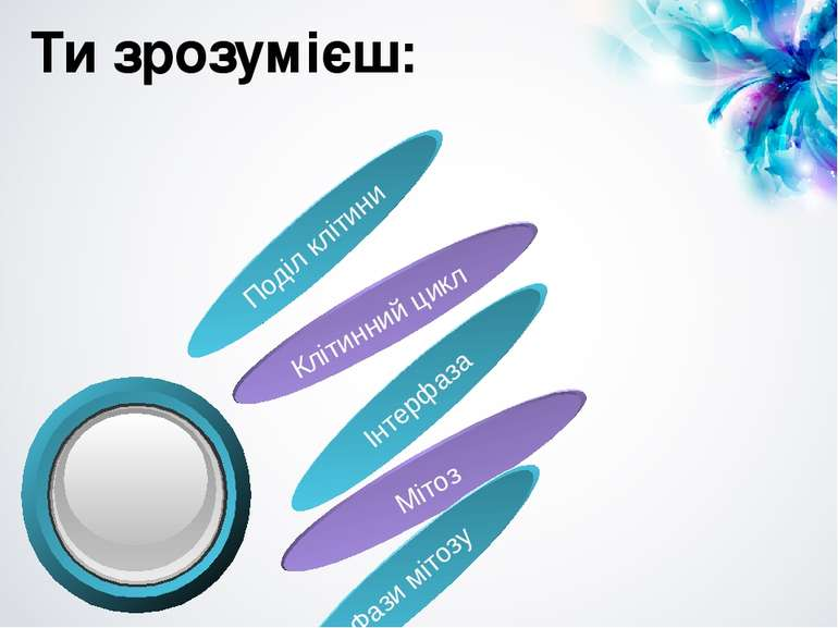Ти зрозумієш: Поділ клітини Клітинний цикл Інтерфаза Мітоз Фази мітозу