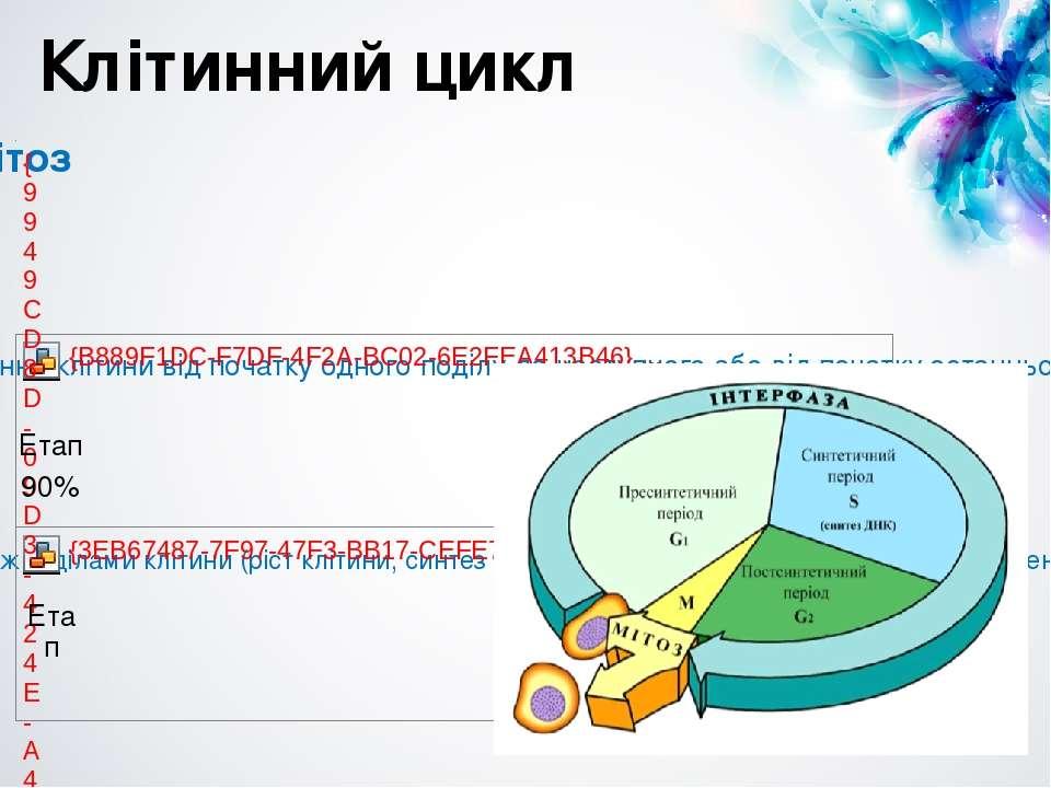 Клітинний цикл Етап