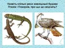 Назвіть спільні риси зовнішньої будови Птахів і Плазунів, про що це свідчить?