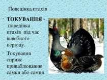 ТОКУВАННЯ - поведінка птахів під час шлюбного періоду. Токування сприяє прива...
