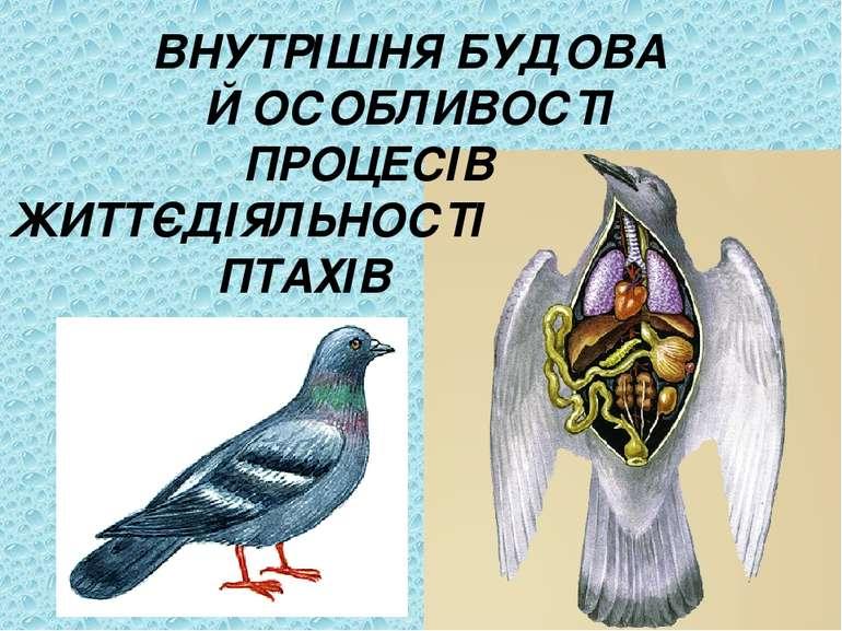 ВНУТРІШНЯ БУДОВА Й ОСОБЛИВОСТІ ПРОЦЕСІВ ЖИТТЄДІЯЛЬНОСТІ ПТАХІВ