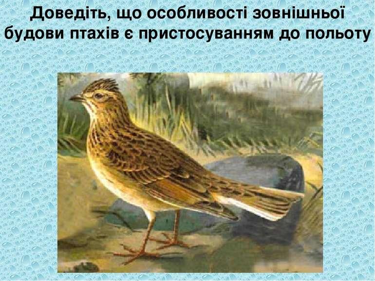 Доведіть, що особливості зовнішньої будови птахів є пристосуванням до польоту
