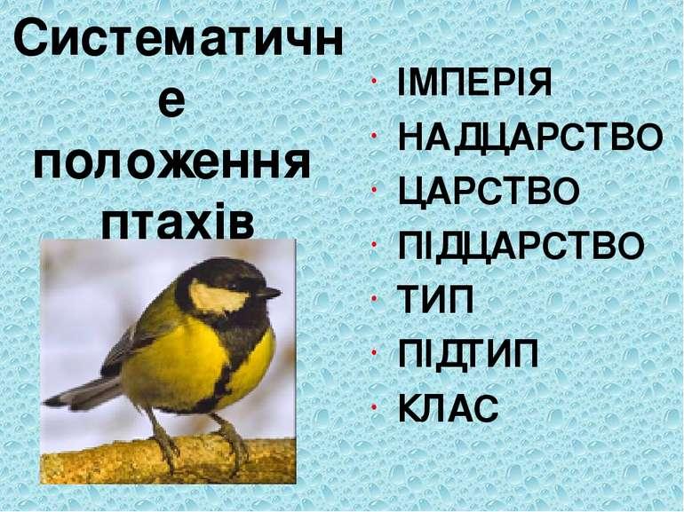 Систематичне положення птахів ІМПЕРІЯ НАДЦАРСТВО ЦАРСТВО ПІДЦАРСТВО ТИП ПІДТИ...