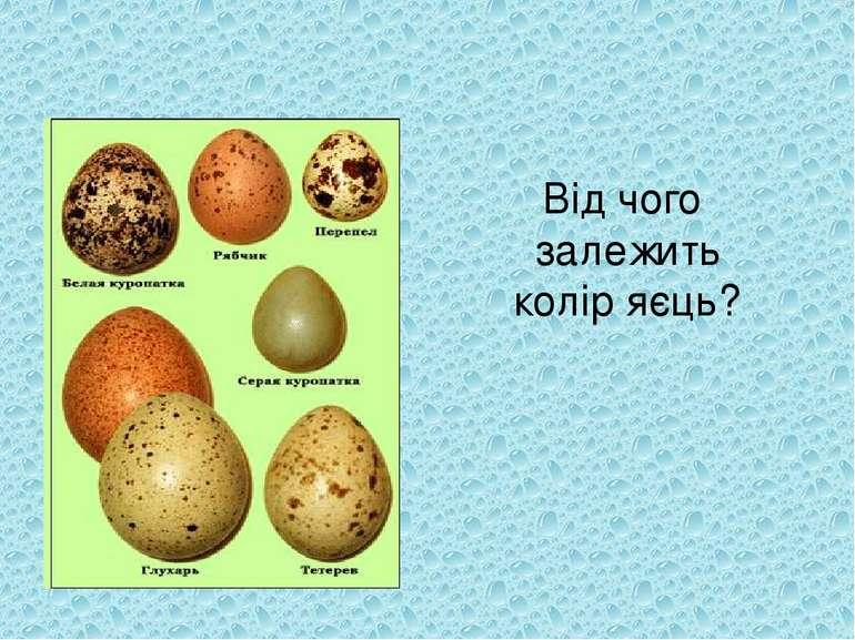 Від чого залежить колір яєць?