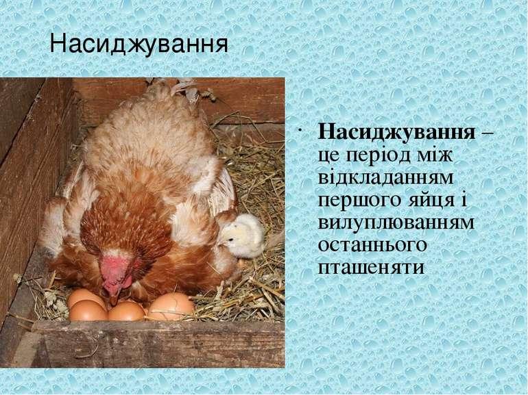 Насиджування –це період між відкладанням першого яйця і вилуплюванням останнь...