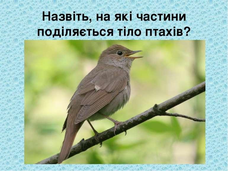 Назвіть, на які частини поділяється тіло птахів?