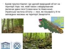 Букові праліси Карпат. Це єдиний природний об'єкт на території Укра- їни, яки...