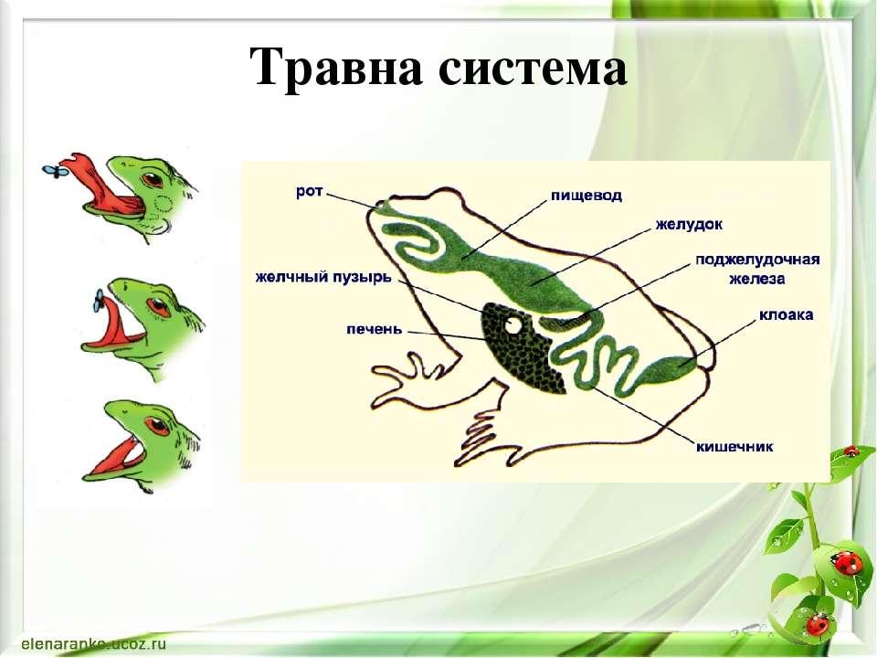 Травна система
