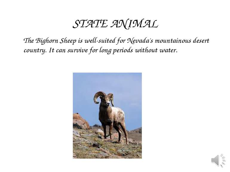 The Bighorn Sheep is well-suited for Nevada's mountainous desert country. It ...