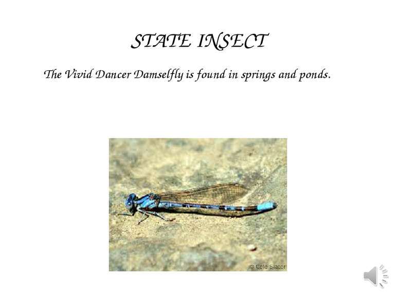 The Vivid Dancer Damselfly is found in springs and ponds. STATE INSECT