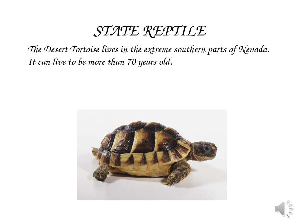 The Desert Tortoise lives in the extreme southern parts of Nevada. It can liv...