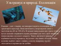Кажани - одні з тварин, які використовують ехолокацію для орієнтації в просто...