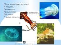 Реактивний рух властивий медузам, кальмарам, восьминогам та іншим живим орган...