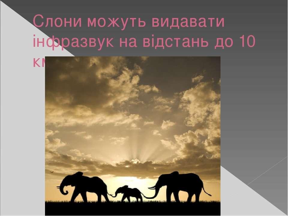Слони можуть видавати інфразвук на відстань до 10 км.