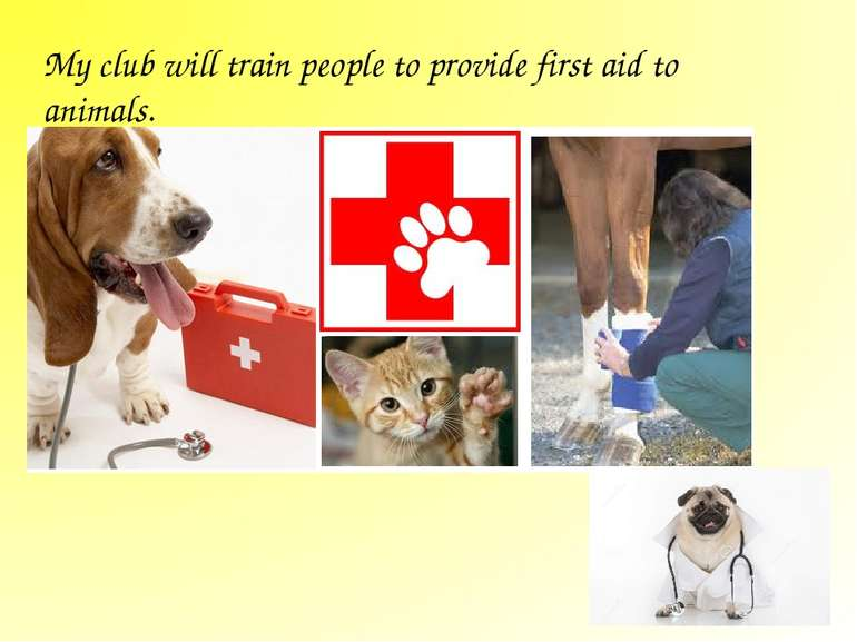 My club will train people to provide first aid to animals.