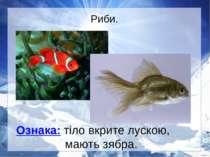 Риби. Ознака: тіло вкрите лускою, мають зябра.