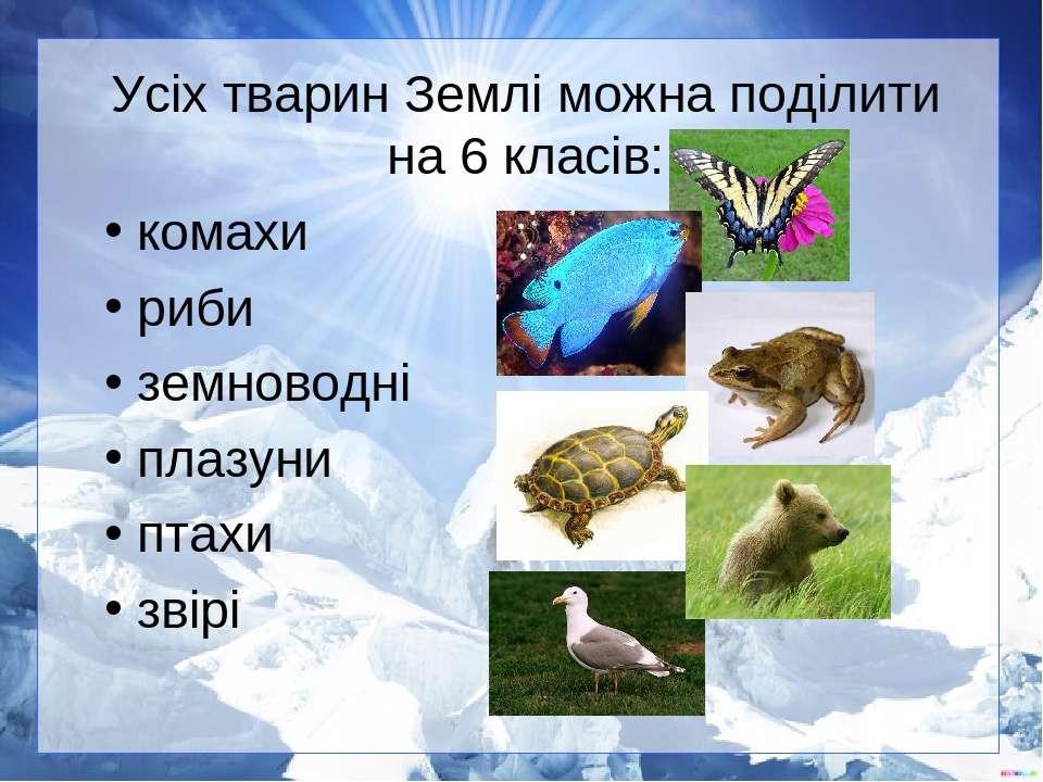 Усіх тварин Землі можна поділити на 6 класів: комахи риби земноводні плазуни ...