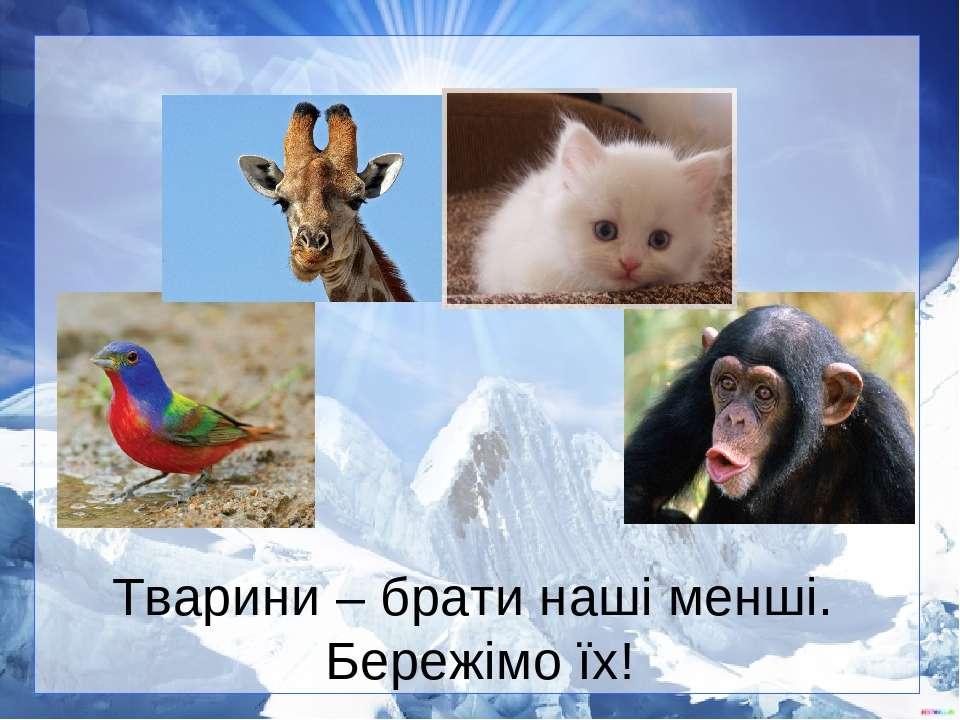 Тварини – брати наші менші. Бережімо їх!