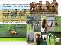 The reserve consists of the acclimatization zoo, arboretum 2.1km², and virgi...