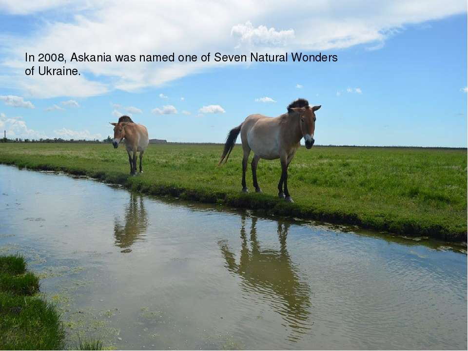 In 2008, Askania was named one ofSeven Natural Wonders of Ukraine.