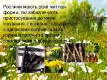 Рослини мають різні життєві форми, які забезпечують пристосування до умов існ...