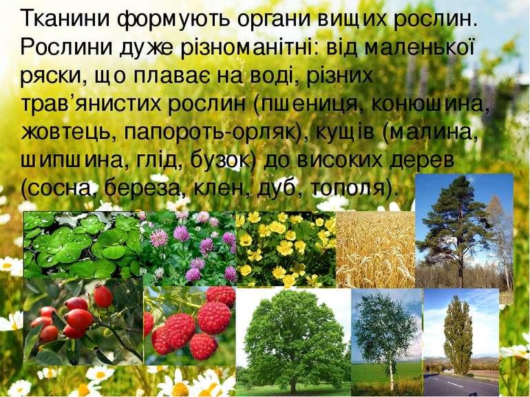 Тканини формують органи вищих рослин. Рослинидуже різноманітні: від маленько...