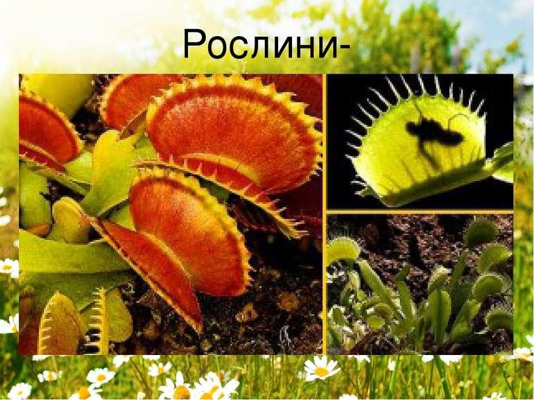 Рослини-хижаки