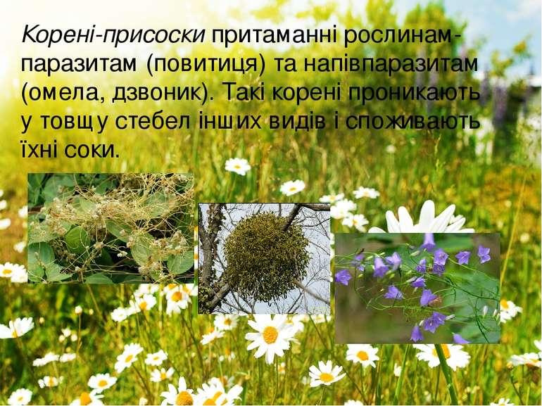 Корені-присоскипритаманні рослинам-паразитам (повитиця) та напівпаразитам (о...