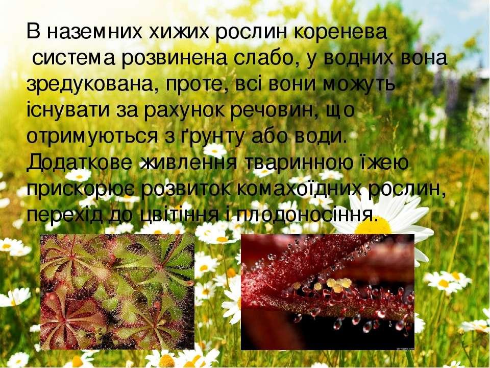 В наземних хижих рослинкоренева системарозвинена слабо, уводнихвона зреду...