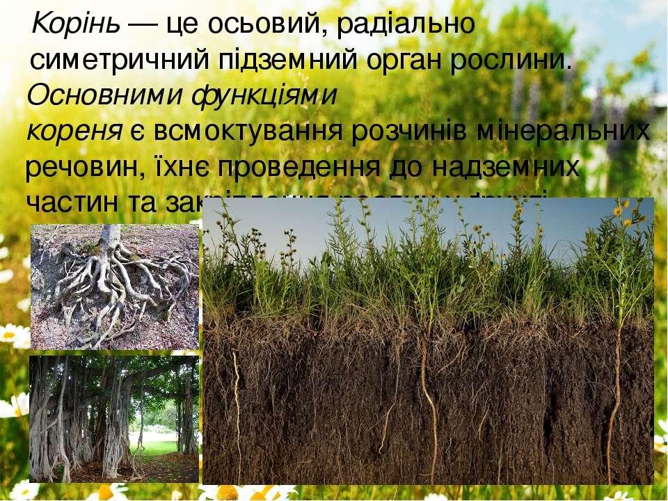 Основними функціями кореняєвсмоктування розчинів мінеральних речовин, їхнє ...