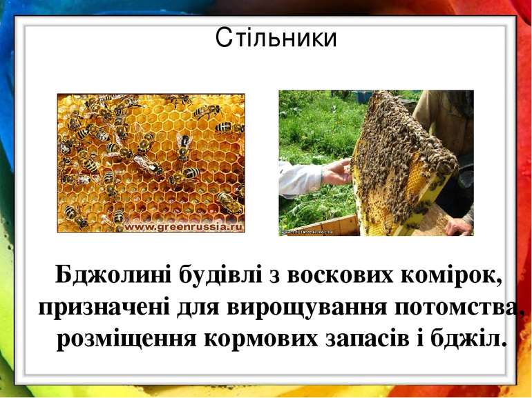 Стільники Бджолині будівлі з воскових комірок, призначені для вирощування пот...