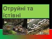 Отруйні та їстівні гриби.