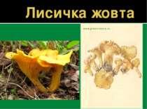 Лисичка жовта