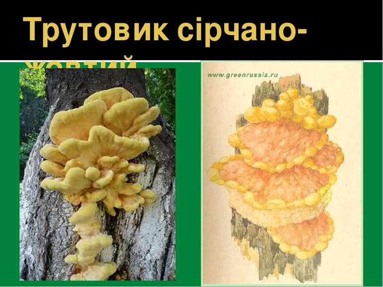 Трутовик сірчано-жовтий
