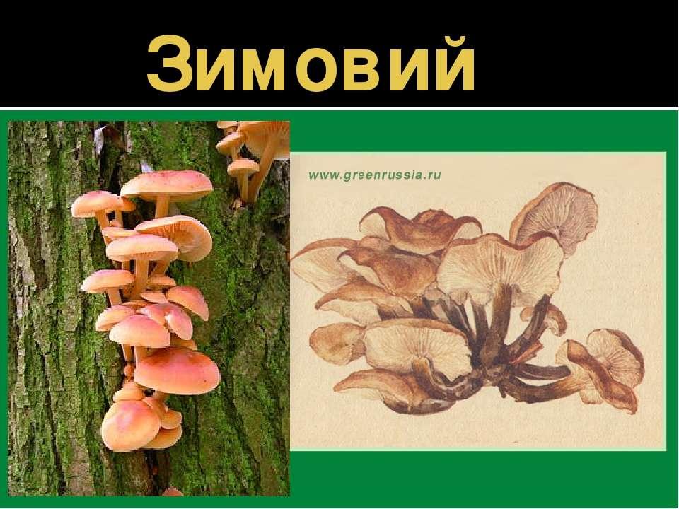 Зимовий гриб