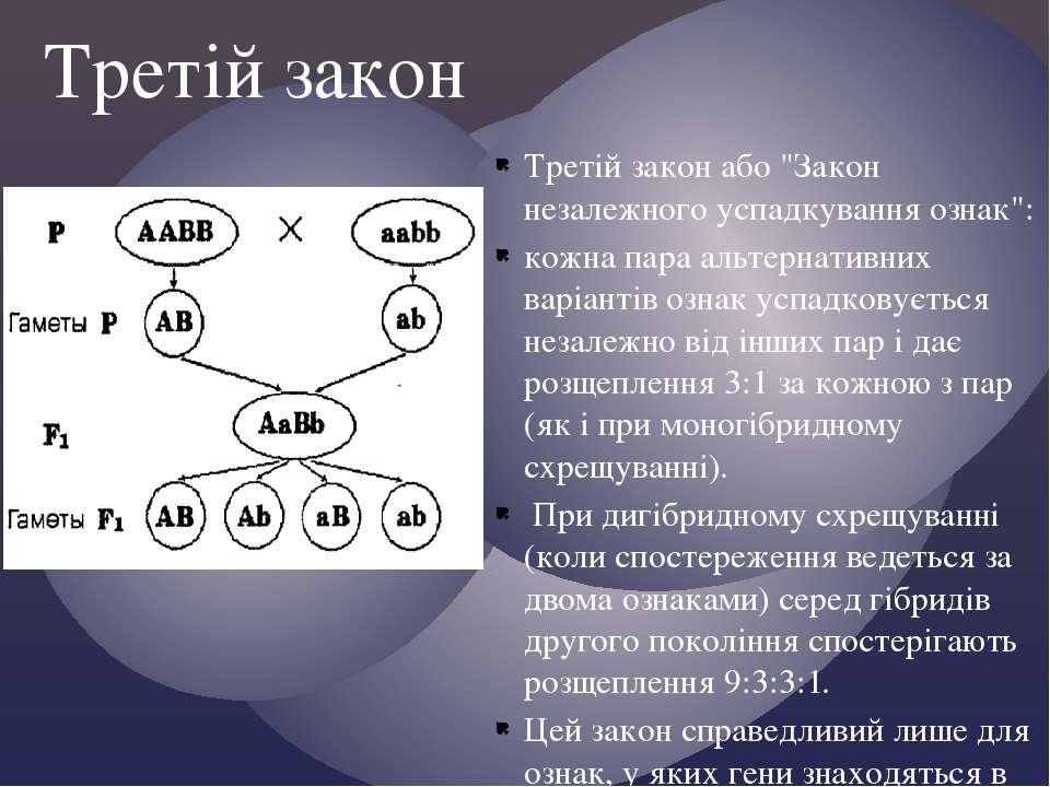 """Третій закон або """"Закон незалежного успадкування ознак"""": кожна пара альтернат..."""