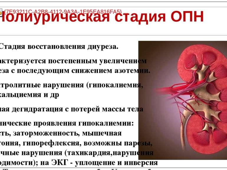 Стадия восстановления диуреза. Характеризуется постепенным увеличением диурез...