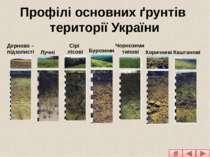 Дерново – підзолисті Сірі лісові Чорноземи типові Каштанові Лучні Буроземи Ко...