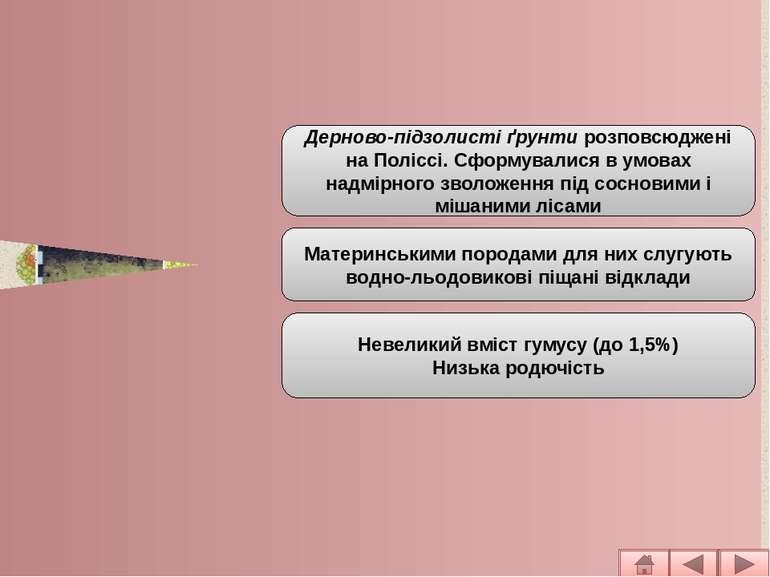 Основні типи ґрунтів рівнинної частини Дерново – підзолисті Дерново-підзолист...