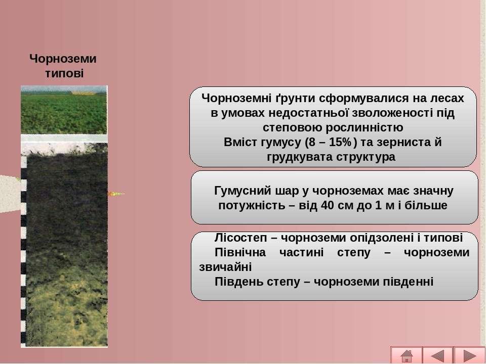 Основні типи ґрунтів рівнинної частини Чорноземні ґрунтисформувалися на леса...