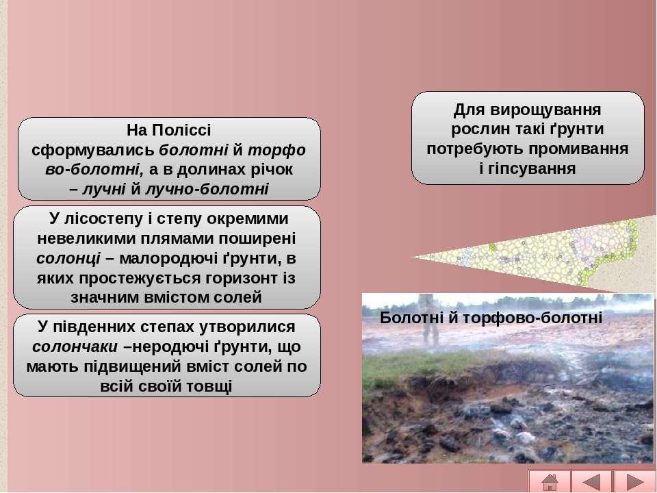 Основні типи ґрунтів рівнинної частини На Поліссі сформувалисьболотнійторф...