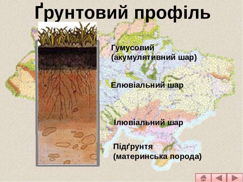 Ґрунтовий профіль Гумусовий (акумулятивний шар) Елювіальний шар Ілювіальний ш...