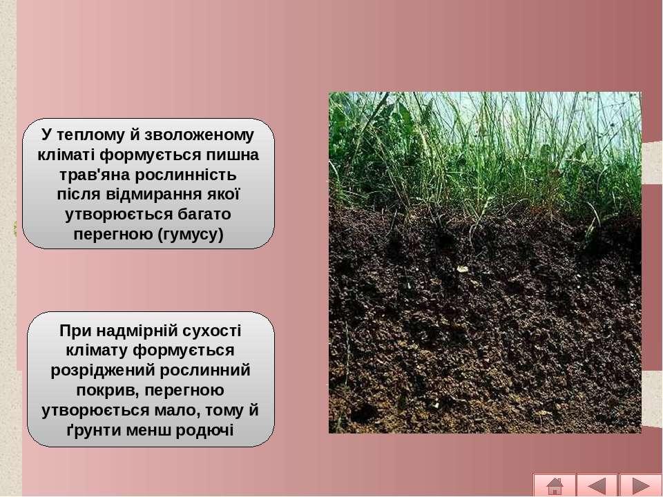 Рослинність У теплому й зволоженому кліматі формується пишна трав'яна рослинн...
